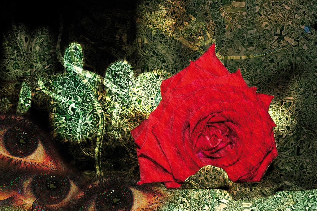 rose_IMG_6462